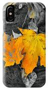 Autumn In Color IPhone Case