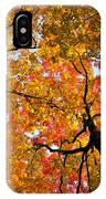 Autumn Maple Trees IPhone Case