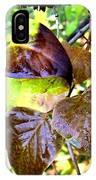 Autumn Splendor 4 IPhone Case