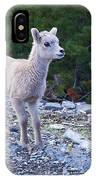 Baby Big Horn Sheep IPhone Case