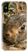Baby Eastern Cottontail IPhone Case