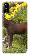 Baby Moose Baxter State Park IPhone Case