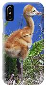 Baby Sandhill Crane 064  IPhone Case