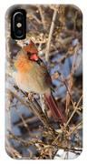 Backyard Birds Female Nothern Cardinal IPhone Case