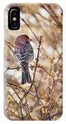 Backyard Birds Male House Finch IPhone Case