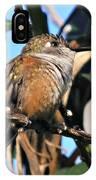 Bahama Woodstar Hummingbird IPhone Case