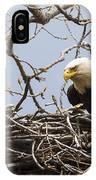 Bald Eagle And Eaglet IPhone Case