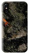 Ballestas Orange Crab 1 IPhone Case