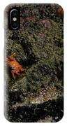 Ballestas Orange Crab 2 IPhone Case