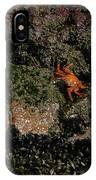 Ballestas Orange Crab 3 IPhone Case
