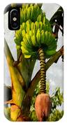 Banana Trees With Fruits And Flower In Lush Tropical Garden IPhone Case