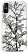 Bare Branches With Snow IPhone Case