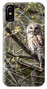 Barred Owl Square IPhone Case