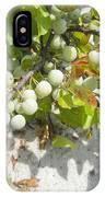 Beach Plum - Prunus Maritima - Island Beach State Park Nj IPhone Case