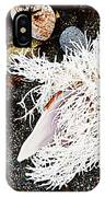 Beach Wares - Shells - Feather IPhone Case