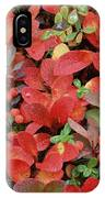 Bearberry In Autumn Yukon Canada IPhone Case