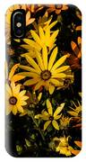 Beautiful African Daisies IPhone Case