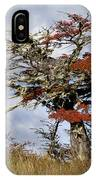 Beech Tree, Chile IPhone Case