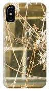 Beige Window At The End Of Winter IPhone Case
