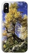 Bent Tree IPhone Case