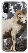 Big Horn Ram In Spring IPhone Case