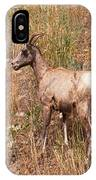 Big Horn Sheep Ewe IPhone Case