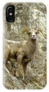 Big Horn Sheep On Mountain IPhone Case