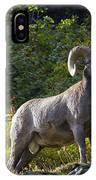 Bighorn Ram IPhone Case