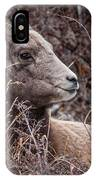 Bighorn Sheep 2 IPhone Case
