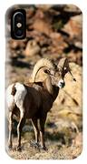 Bighorn Stare IPhone Case