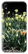 Biltmore Daffodils IPhone Case