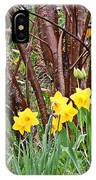 Birch And Daffiodils IPhone Case