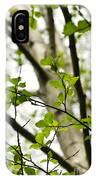 Birch Tree In Spring IPhone Case