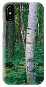 Birch Trees In A Forest IPhone Case