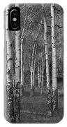 Birch Trees No.0148 IPhone Case