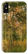 Birch Trees2 IPhone Case