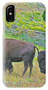Bison Pair In Hayden Valley In Yellowstone National Park-wyoming  IPhone Case