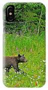 Black Bear Along Yellowhead Highway-bc IPhone Case