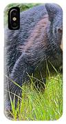 Black Bear Cub Near Road In Grand Teton National Park-wyoming IPhone Case