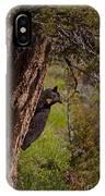Black Bear In A Tree IPhone Case