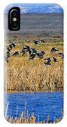 Black-necked Stilts In Flight IPhone Case
