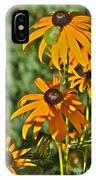 Black Susan Tree Frog IPhone Case