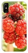Blackberries Ripening IPhone Case