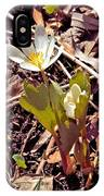 Bloodroot Reaching For The Spring Sun IPhone Case