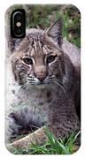 Bobcat 17 IPhone Case
