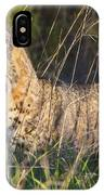 Bobcat In The Grass IPhone Case