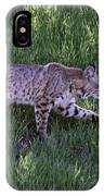 Bobcat On The Move IPhone Case