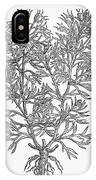 Botany: African Rue, 1597 IPhone Case
