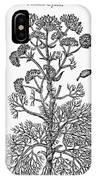 Botany: Giant Fennel, 1597 IPhone Case