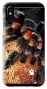 Brachypelma Smithi - Redknee Tarantula IPhone Case